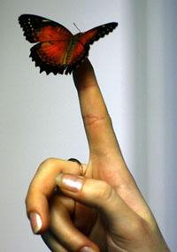 Выставка ЖИВЫХ тропических бабочек в Сызрани