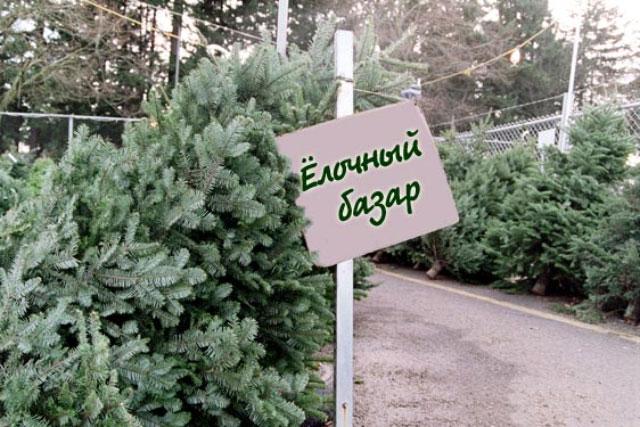 Главные елки Сызрани заняли свои места